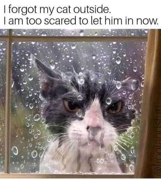 Image of Random Random Cat Memes For Cat Lovers