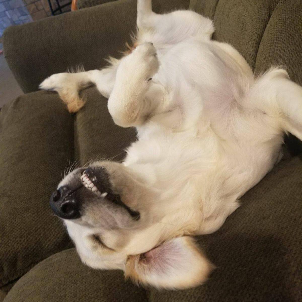 Dreams Of Belly Rubs on Random Animals Sleep Like Absolute Weirdos And We Can't Get Enough