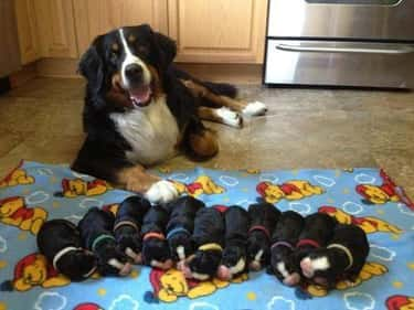 Quick Before They Wake Up is listed (or ranked) 2 on the list 32 Proud Dog Mommas Who Are Super Proud Of What They Created