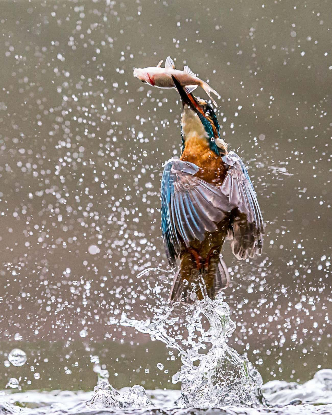 A Bird After Snatching A Fish is listed (or ranked) 3 on the list 32 High-Speed Photos That Freeze Time And Show You The World In A New Way