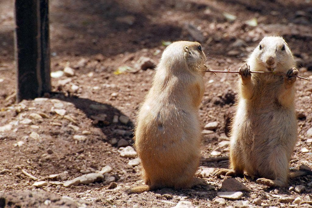 Random EducationalFacts About Animals That Are Both Heartwarming And Interesting