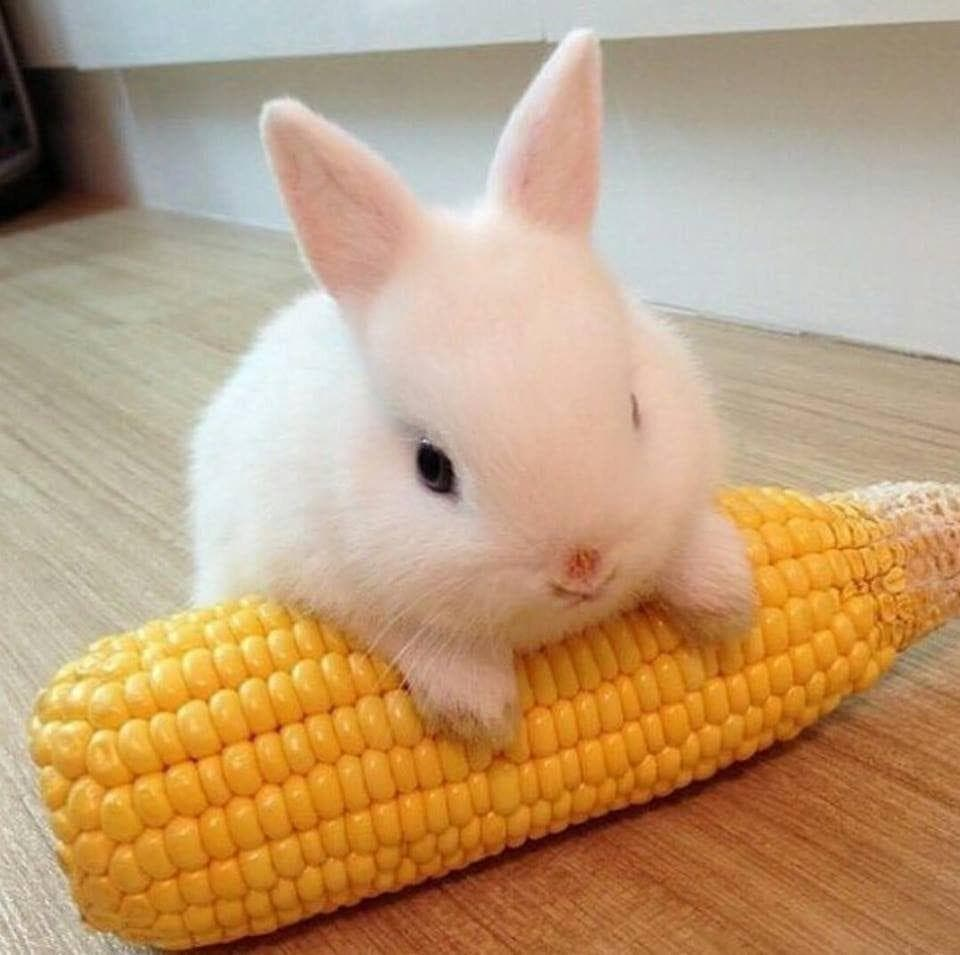 Random Baby Animals For All Stressed People That Need Something Cute To Look At