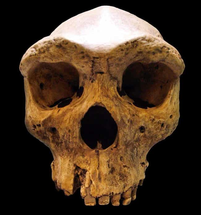 A 299,000-Year-Old Skull... is listed (or ranked) 1 on the list 15 Bizarre Archaeological Finds That Rewrote History As We Know It