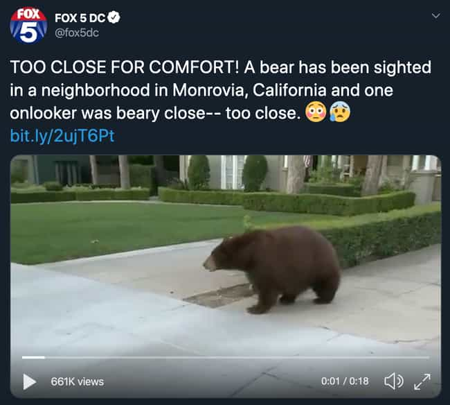 A Bear In A California N... is listed (or ranked) 4 on the list Animals Are Reclaiming Land Since Humans Went Into Quarantine