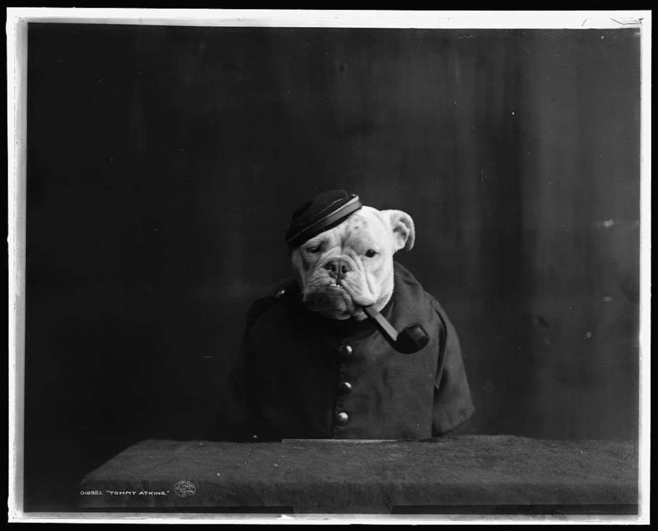 Tommy Atkins Is Ready To Do Hi is listed (or ranked) 3 on the list The 18 Proudest And Most Sophisticated History Dogs We Could Find On The Internet