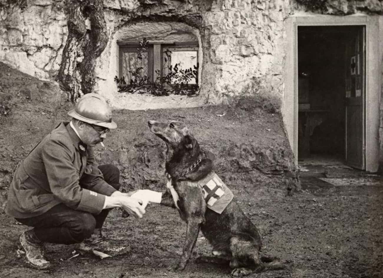 Lucas Dubois Assures His Comra is listed (or ranked) 4 on the list The 18 Proudest And Most Sophisticated History Dogs We Could Find On The Internet