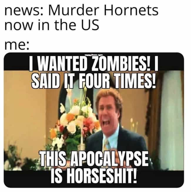 I Hate It Here is listed (or ranked) 3 on the list Murder Hornets Are Taking Over The World And The Internet Is Buzzing With Funny Memes
