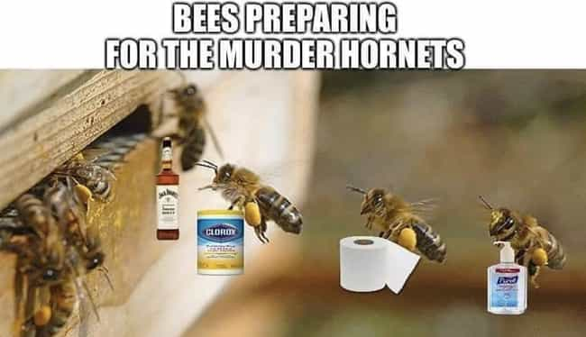 The Bees Are Panic Buyin... is listed (or ranked) 1 on the list Murder Hornets Are Taking Over The World And The Internet Is Buzzing With Funny Memes