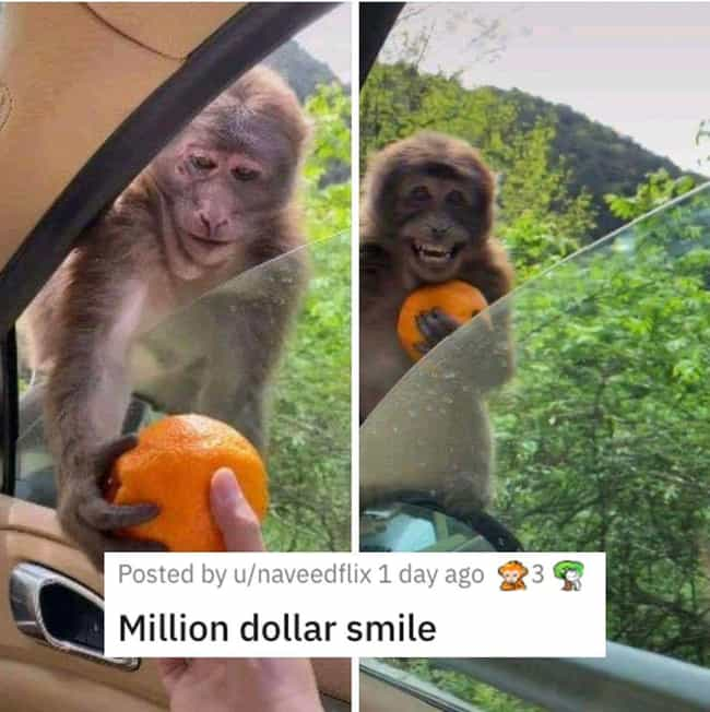 Monkey Receives A Sweet ... is listed (or ranked) 4 on the list 26 Random Photos From This Week That Went Viral