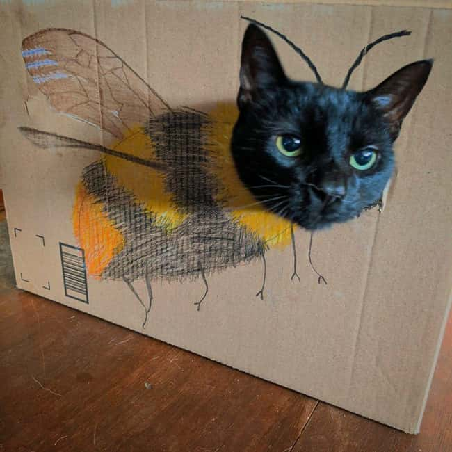 Cat Hornet is listed (or ranked) 15 on the list 26 Random Photos From This Week That Went Viral