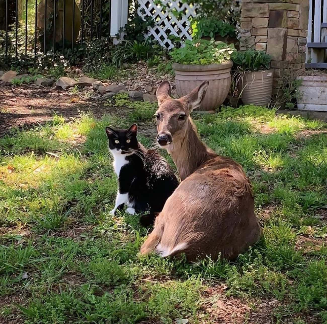 Dottie + O'Malley is listed (or ranked) 2 on the list 25 Animal Best Friends Because We Need Some Positivity Right Now