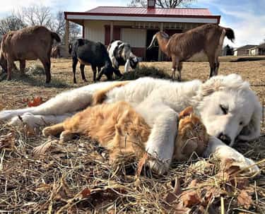 Animals At Wild Oak Farms is listed (or ranked) 6 on the list 25 Animal Best Friends Because We Need Some Positivity Right Now
