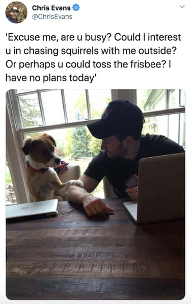 Could His Dog Be Any More Poli is listed (or ranked) 2 on the list 28 Of The Funniest Things Chris Evans Ever Tweeted