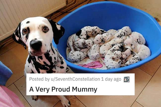 Very Proud Mummy is listed (or ranked) 11 on the list 38 Viral Pictures That Made Gave Us Much Needed Positivity This Past Week