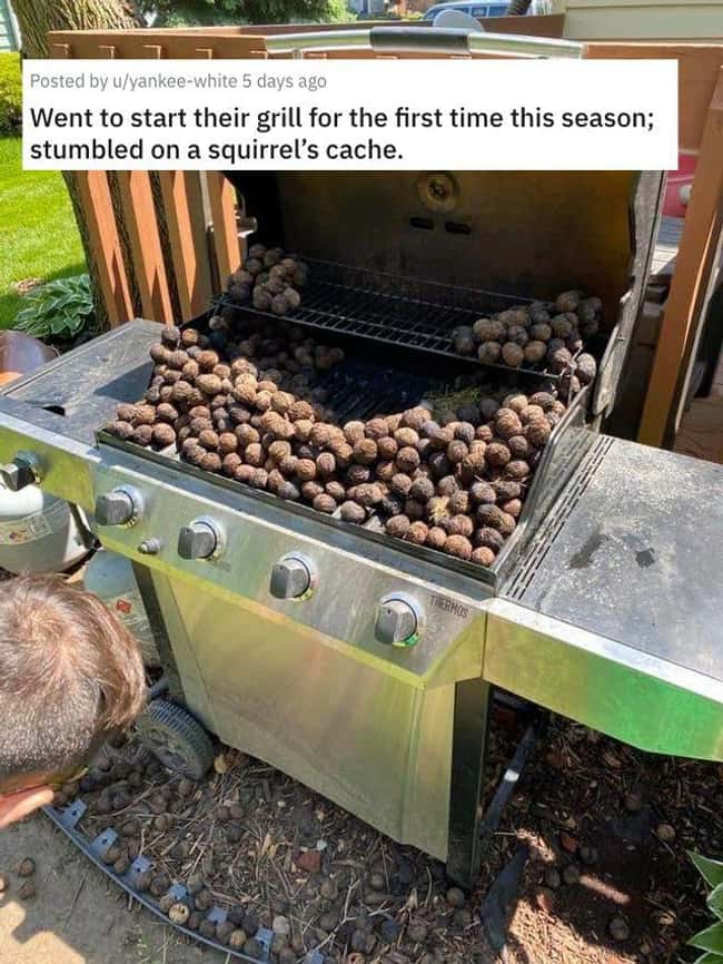 Squirrel Cache is listed (or ranked) 14 on the list 38 Viral Pictures That Made Gave Us Much Needed Positivity This Past Week