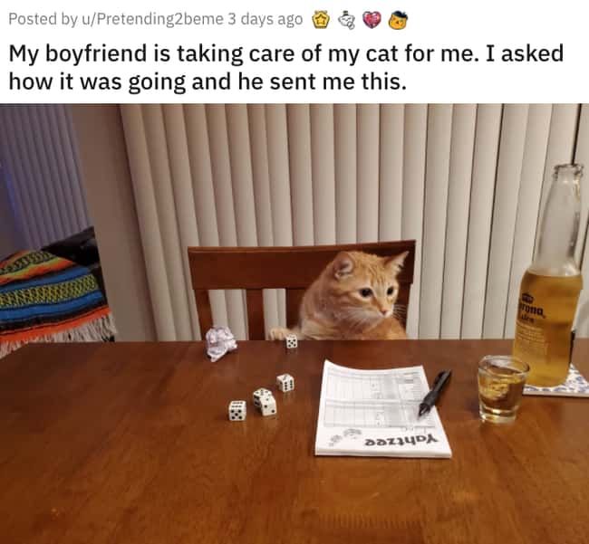 Taking Care Of The Cat is listed (or ranked) 9 on the list 38 Viral Pictures That Made Gave Us Much Needed Positivity This Past Week
