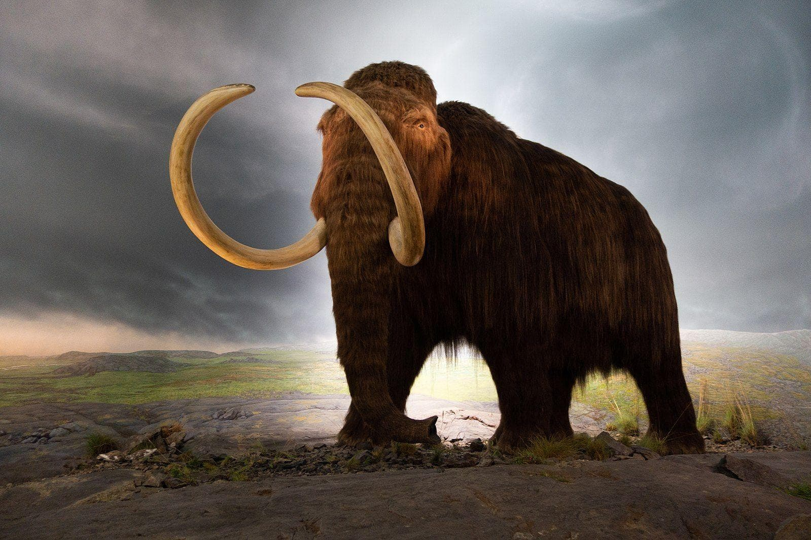 Random Facts About Woolly Mammoths That Might Explain Why They Became Extinct