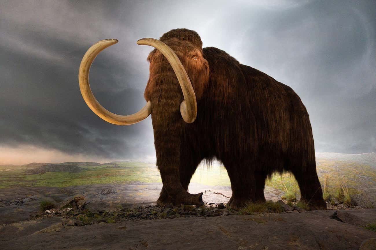 A Mammoth Bone Pit In Mexico C is listed (or ranked) 1 on the list Facts About Woolly Mammoths That Might Explain Why They Became Extinct