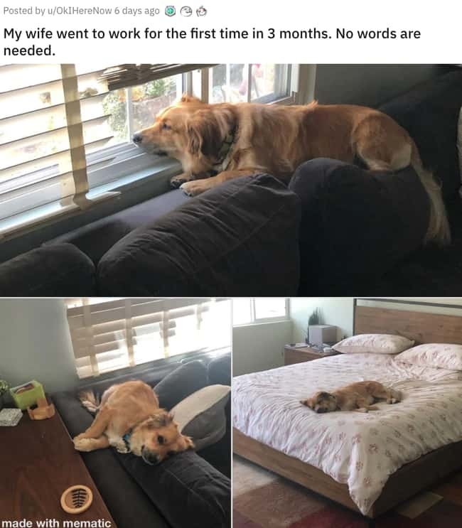 No Longer Working From Home is listed (or ranked) 7 on the list 31 Awesome Pictures That Went Viral In June 2020