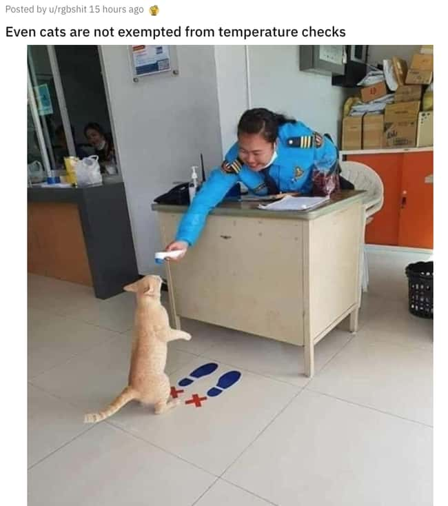 Cats Are Not Exempt is listed (or ranked) 17 on the list 31 Awesome Pictures That Went Viral In June 2020