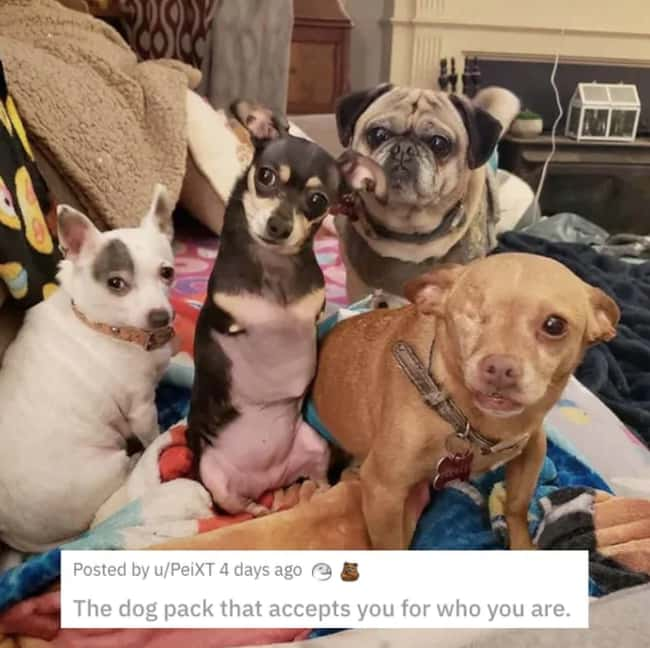 Dogs Welcoming You In is listed (or ranked) 8 on the list 31 Awesome Pictures That Went Viral In June 2020