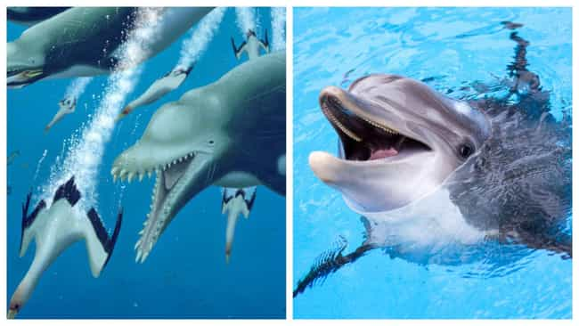 Dolphins And Ankylorhiza... is listed (or ranked) 2 on the list Modern Animals And Their Prehistoric Counterparts