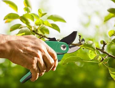 Pruning Shears is listed (or ranked) 2 on the list 24 Tools And Accessories To Keep Your Garden Blooming