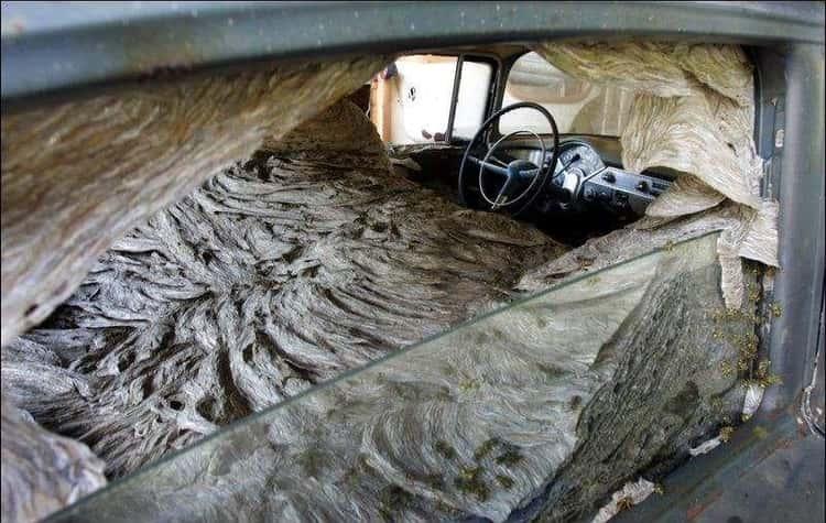 Inside This Car