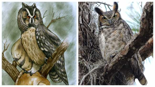 Owls And 'Cannibal' Owls... is listed (or ranked) 1 on the list Modern Animals And Their Prehistoric Counterparts
