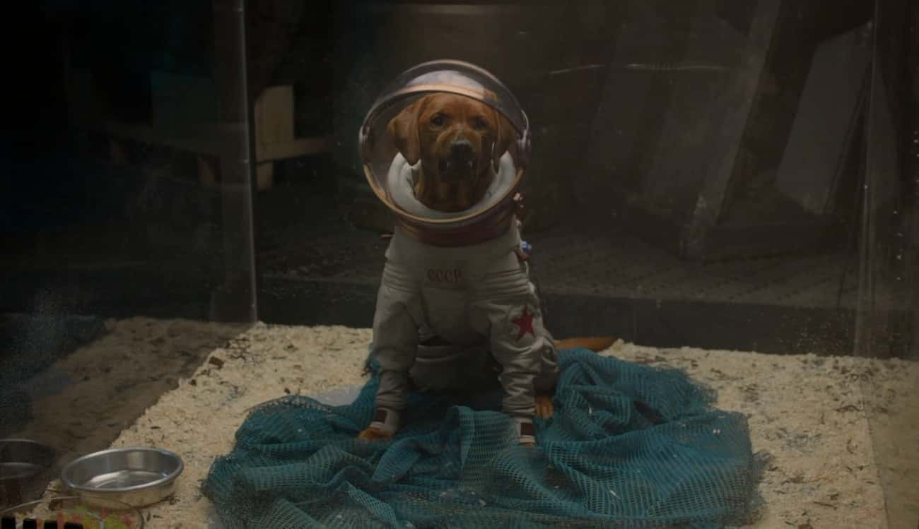 Cosmo the Space Dog