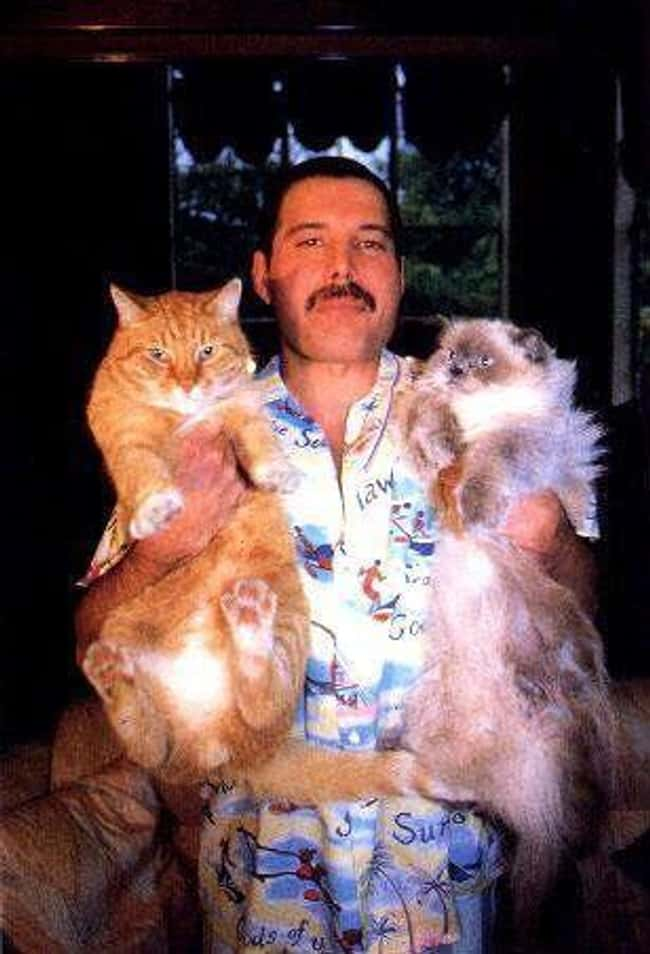 Freddie Mercury is listed (or ranked) 6 on the list 24 Extremely Peculiar Personal Quirks that Historic Musicians Had
