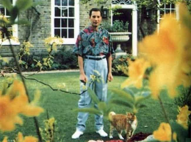 Freddie Mercury is listed (or ranked) 4 on the list The Last Known Photos of 52 Famous People