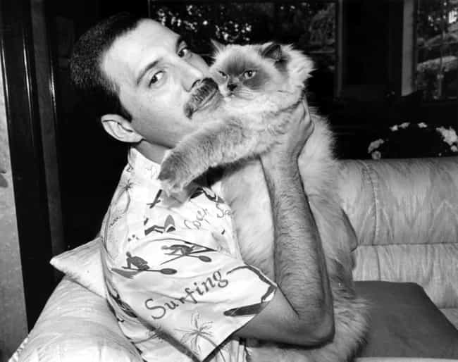 Freddie Mercury is listed (or ranked) 1 on the list Cool Old Photos of Celebrities with Their Cats