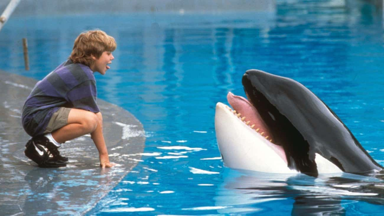 The Whale From 'Free Willy' Su is listed (or ranked) 2 on the list The Saddest Fates Of Our Favorite Movie And TV Animals