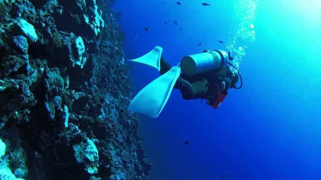 French Polynesia is listed (or ranked) 4 on the list The Best Countries for Scuba Diving