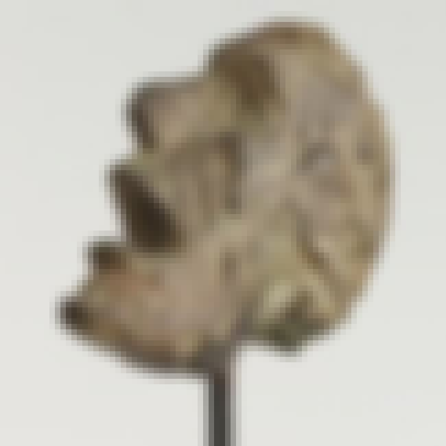 Head of a Man on a Rod is listed (or ranked) 6 on the list Famous Alberto Giacometti Sculptures