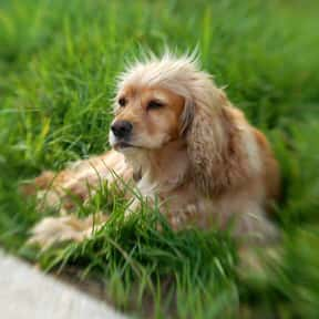 Sansa is listed (or ranked) 3 on the list The Best Nerdy Names to Give Your Dog