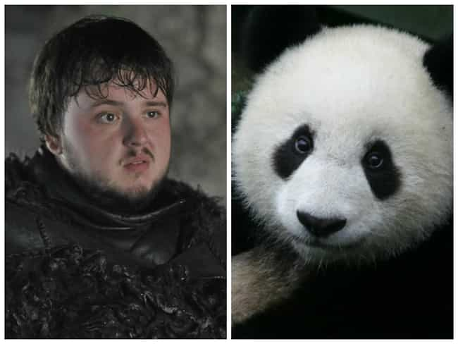 Samwell Tarly is listed (or ranked) 1 on the list Game of Thrones Characters and Their Animal Counterparts