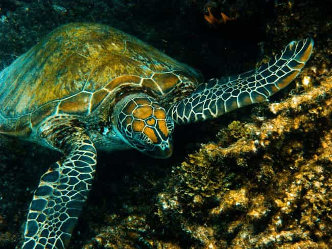 Great Barrier Reef is listed (or ranked) 3 on the list The Best Scuba Destinations In The World