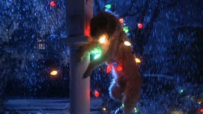 Gremlins is listed (or ranked) 3 on the list The Best Final Pets That Make It Through Horror Movies
