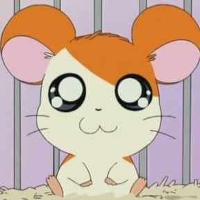 Hamtaro is listed (or ranked) 12 on the list The Very Best Anime for Kids