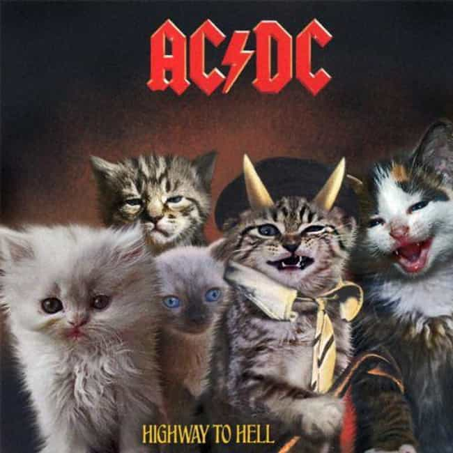 Highway to Hell is listed (or ranked) 3 on the list Genius Recreates Album Covers Featuring Cats