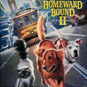 Homeward Bound II: Lost in San is listed (or ranked) 10 on the list The Best Cat Movies