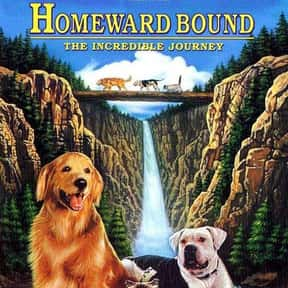 Homeward Bound: The Incredible is listed (or ranked) 22 on the list The Best Movies of 1993
