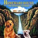 Homeward Bound: The Incredible... is listed (or ranked) 12 on the list Disney Movies That Will Make You Cry