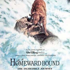 Homeward Bound: The Incredible is listed (or ranked) 4 on the list The Best Cat Movies