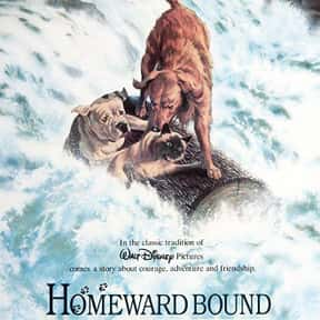 Homeward Bound: The Incredible is listed (or ranked) 17 on the list The Greatest Animal Movies Ever Made
