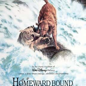 Homeward Bound: The Incredible is listed (or ranked) 1 on the list The Greatest Dog Movies Of All Time