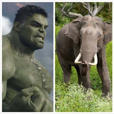 The Hulk Stands As Tall As An Asian Elephant At 8'