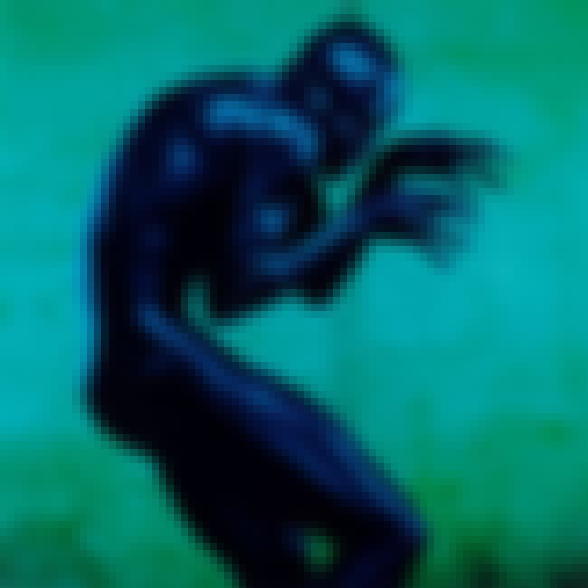 Human Being is listed (or ranked) 2 on the list The Best Seal Albums of All Time